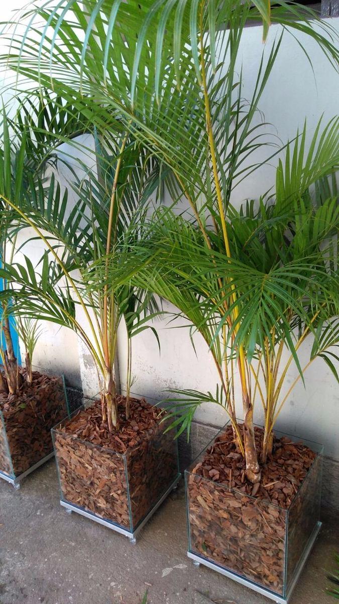 palmeira-areca-bambu-no-vaso-de-vidro-35-x-35-cm-D_NQ_NP_614364-MLB25622776524_052017-F